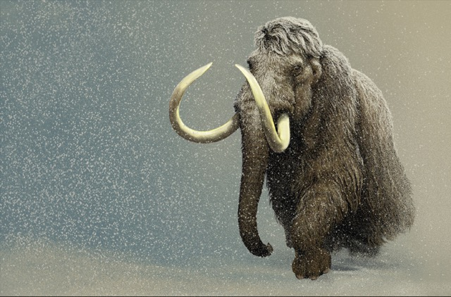 Mammoth_picture_2
