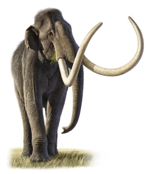 Mammoth_picture_3