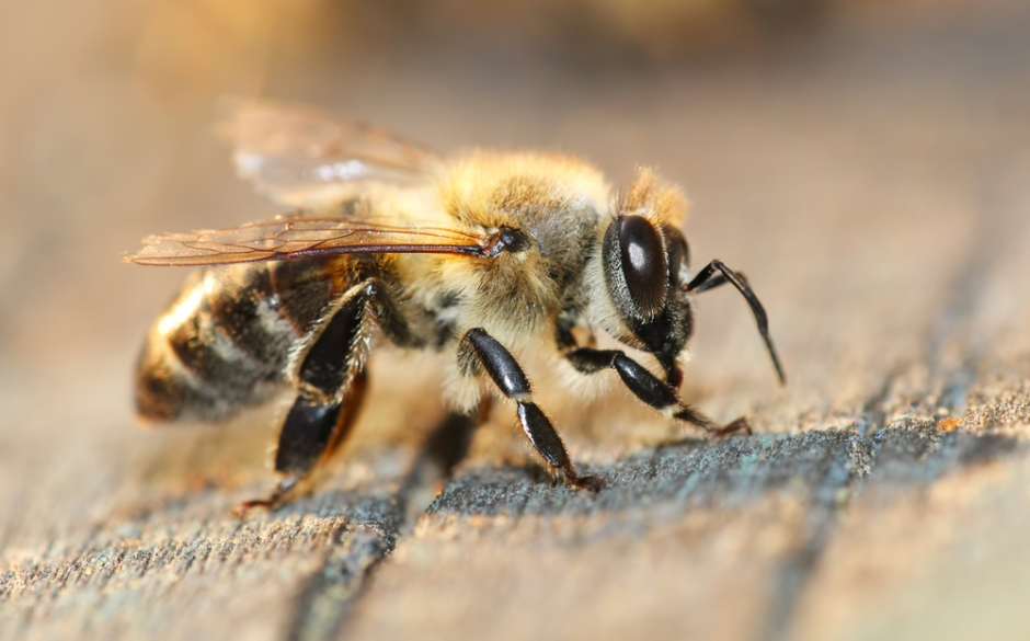 Winged Avatars Of Memory And Return >> Honeybee Memories Another Piece Of The Alzheimer S Puzzle