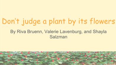 dont-judge-a-plant