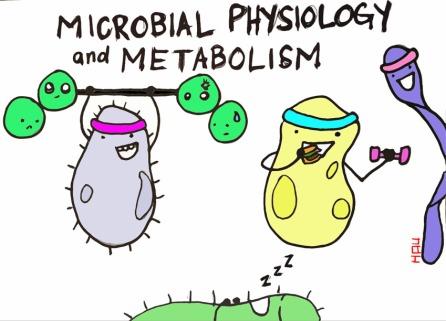 physiologyandmetabolismcopy