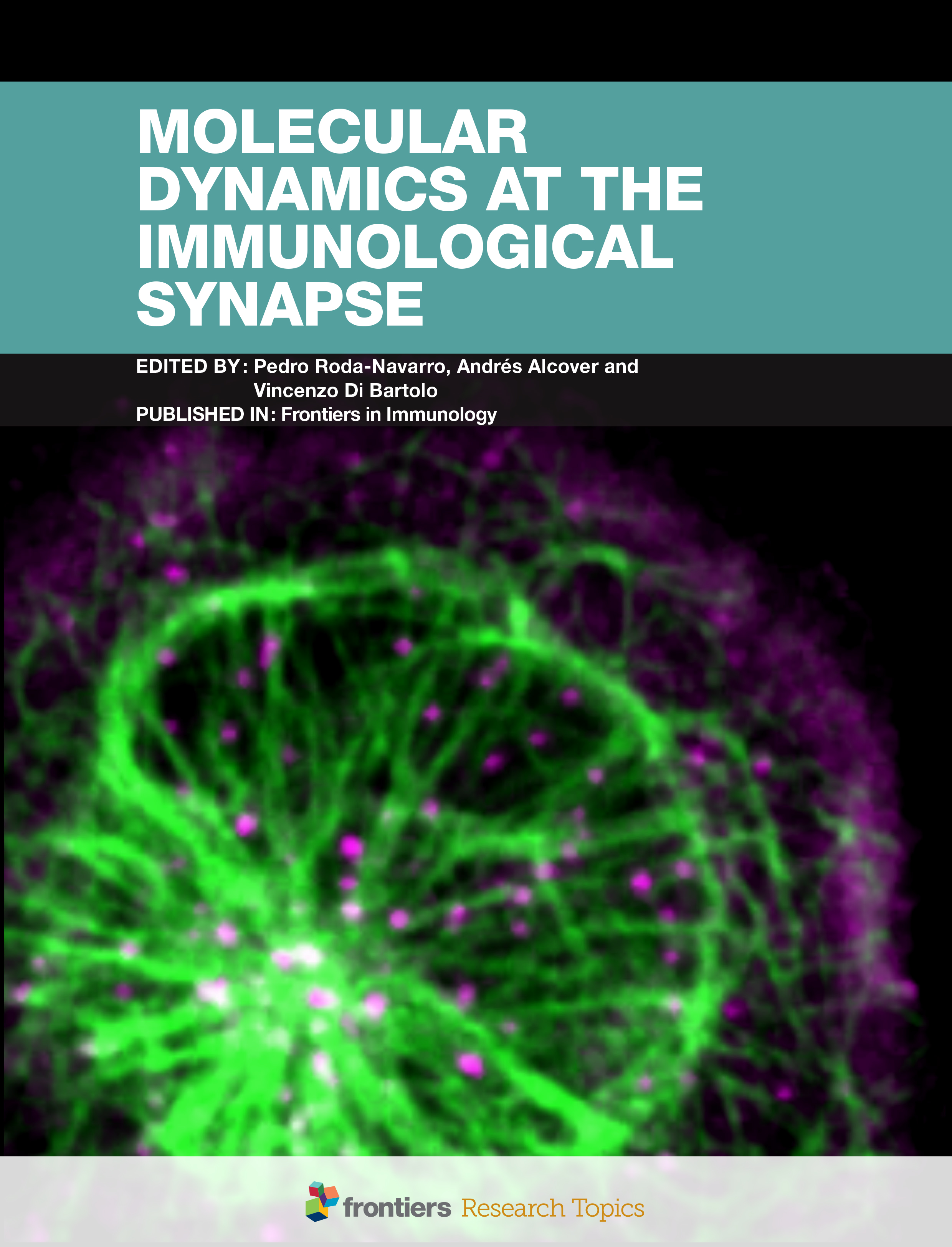 Molecular Dynamics at the ImmunologicalSynapse