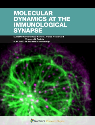 Immunological synapses are regulated by the interplay between the actin cytoskeleton, microtubules, and signaling protein complexes.