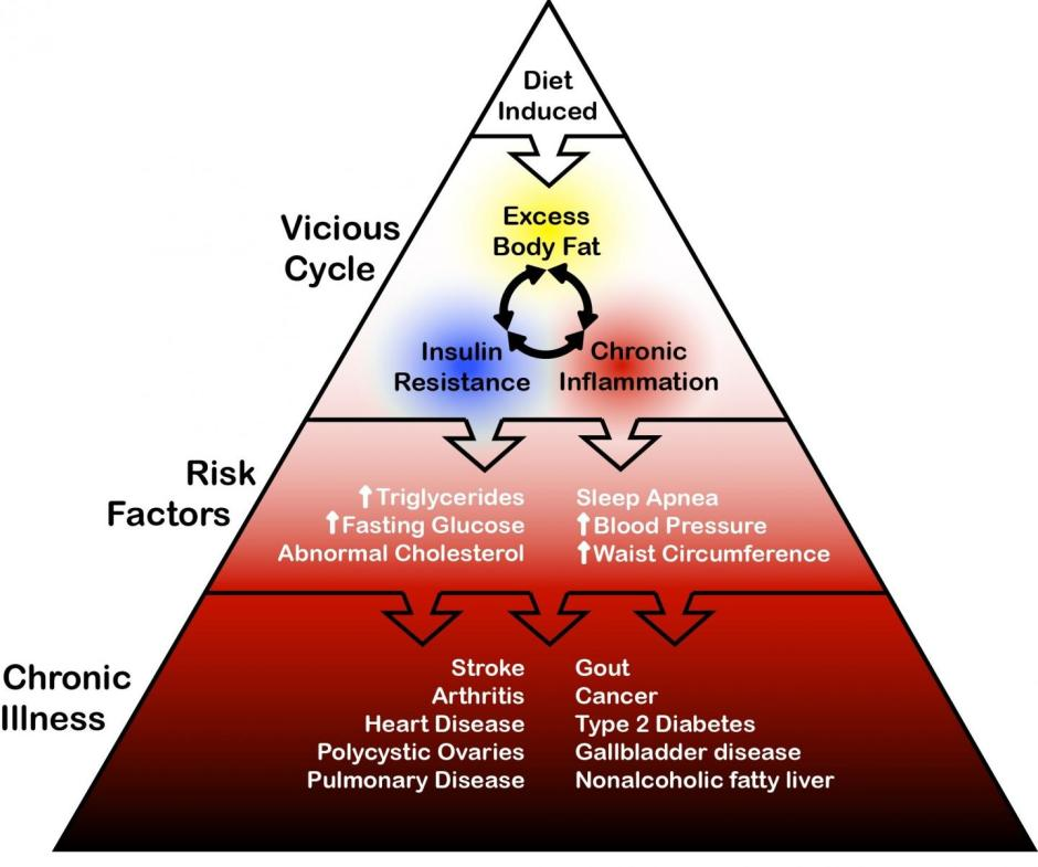 Rather than thinking of these disorders as separate, individual clinical problems, it might be best to consider the relationships between overfat, its various risks, and its associated downstream diseases as a spectrum or progression where the vicious cycle of overfat, insulin resistance and chronic inflammation lies at one end, (constituting the population with early measurable abnormality), while the presence of chronic conditions resides at the other end. Credit: Maffetone, Rivera-Dominguez and Laursen.
