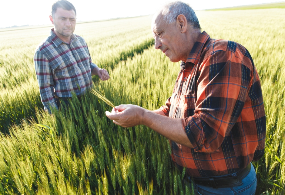 Frontiers-in-plant-science-traditional-knowledge-farmer-production-wheat