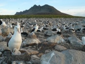 Marine-fisheries-conservation-albatross-diet