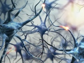 脑癌和脑垂体组织