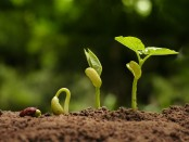 Plant-breeding-photosynthesis-energy