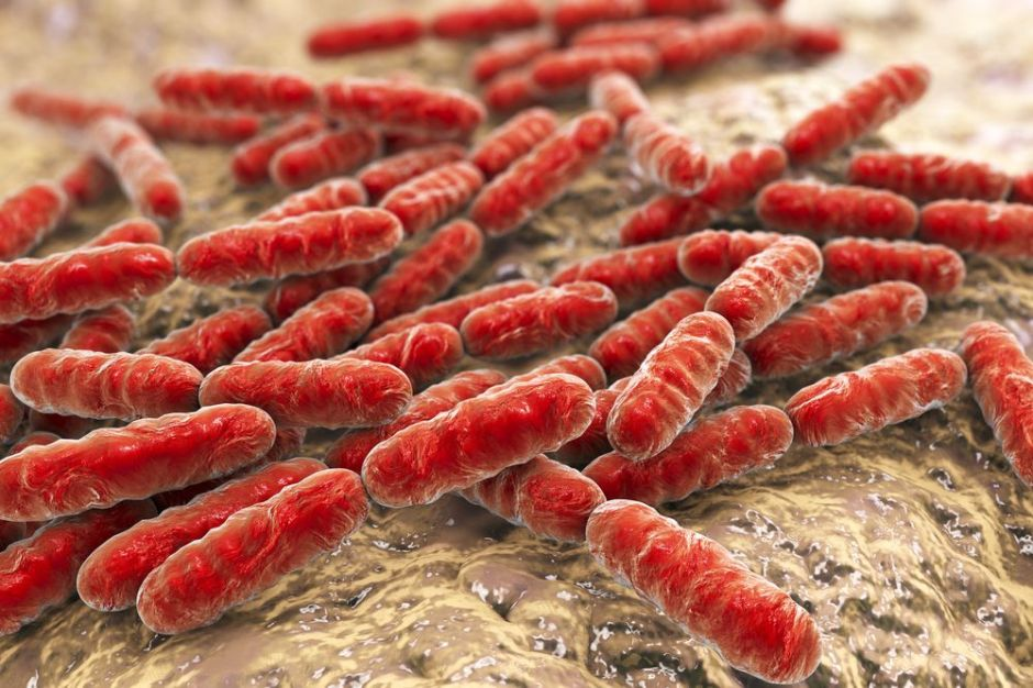 Gut microbiome (bacteria) linked to aging and inflammation