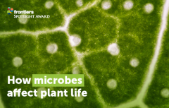 Plant-Microbiome