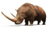 Megafauna extinction mammoth woolly rhinoceros giant sloth