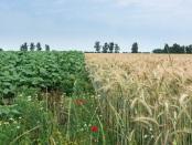 可持续强化和生态系统服务