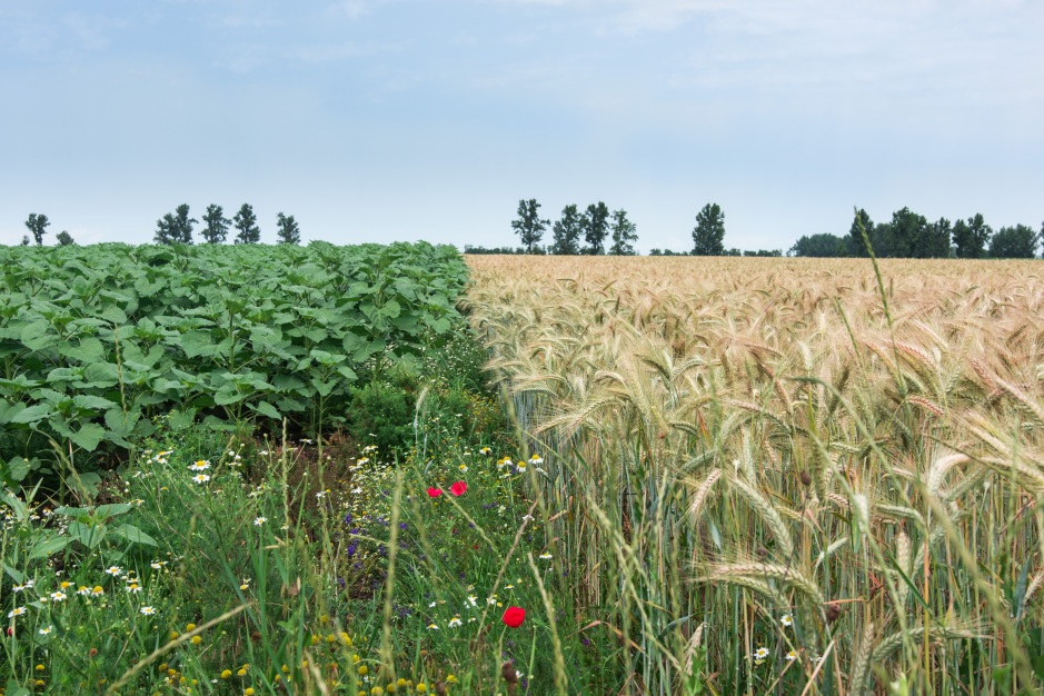 Sustainable Intensification and Ecosystem Services