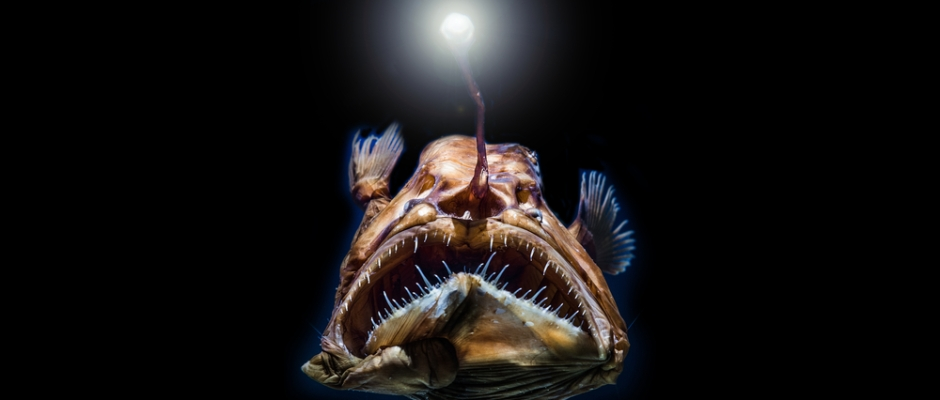 Science  Research News  Frontiers  Openaccess Publisher  See  Seabed Mining Could Destroy Deep Sea Ecosystems