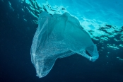 Marine science: plastic pollution mesopelagic fish