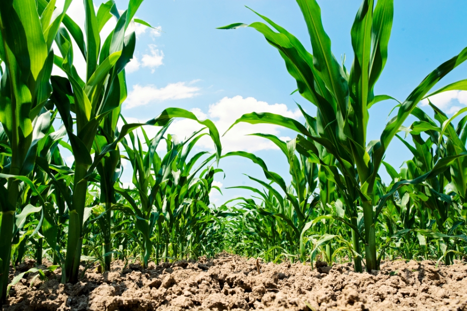 Sustainable Food Security: Climate Smart Food Systems
