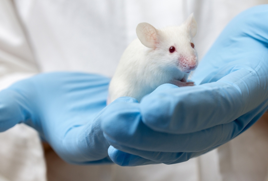 New computer model to reduce animal testing