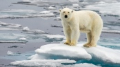Frontiers in Marine Science: Traditional knowledge sheds light on climate change and polar bear ecology in East Greenland