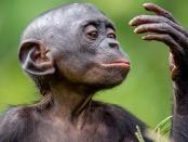 万博亚洲体育生态学和进化的前沿:在猿类中发现了独特的人类肌肉。