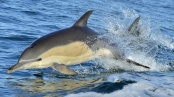 Frontiers in Marine Science: Dolphins deliberately killed for use as bait in global fisheries
