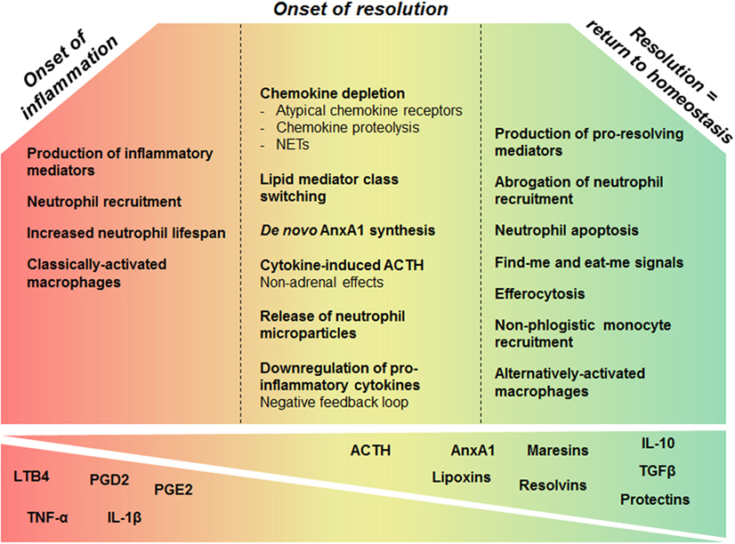 Credit: Sugimoto MA, Sousa LP, Pinho V, Perretti M and Teixeira MM (2016) Resolution of Inflammation: What Controls Its Onset? Front. Immunol. 7:160. doi: 10.3389/fimmu.2016.00160