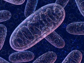 Dysfunction in mitochondria could be root cause of depression, providing opportunity for new developments of antidepressant drugs: Frontiers in Neuroscience