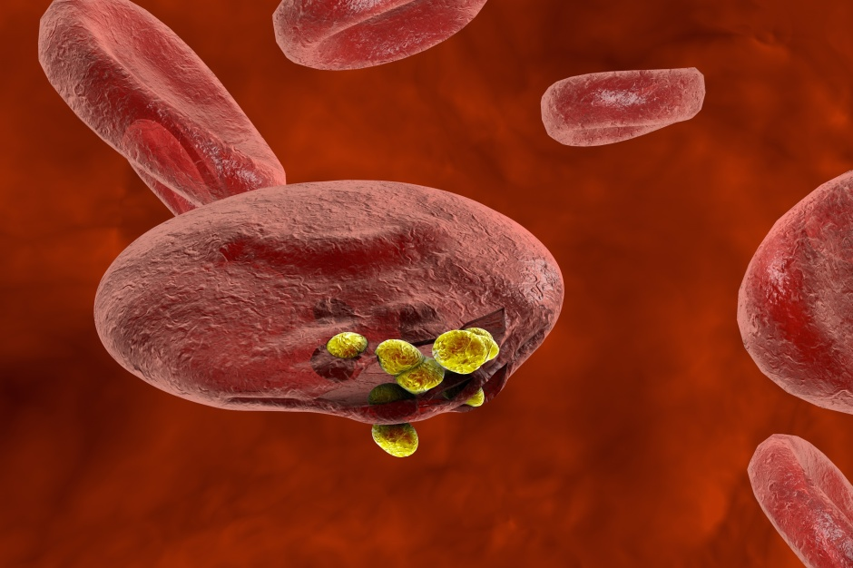3D illustration of red blood cells, plasmodium causing malaria illness