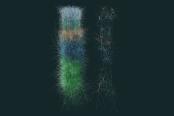 EPFL / Blue Brain MOOC