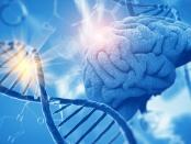 孤独症患者意识到了大脑中的疾病,导致了大脑的新症状,而在大脑中,有一个神经细胞结构,表明,基因突变