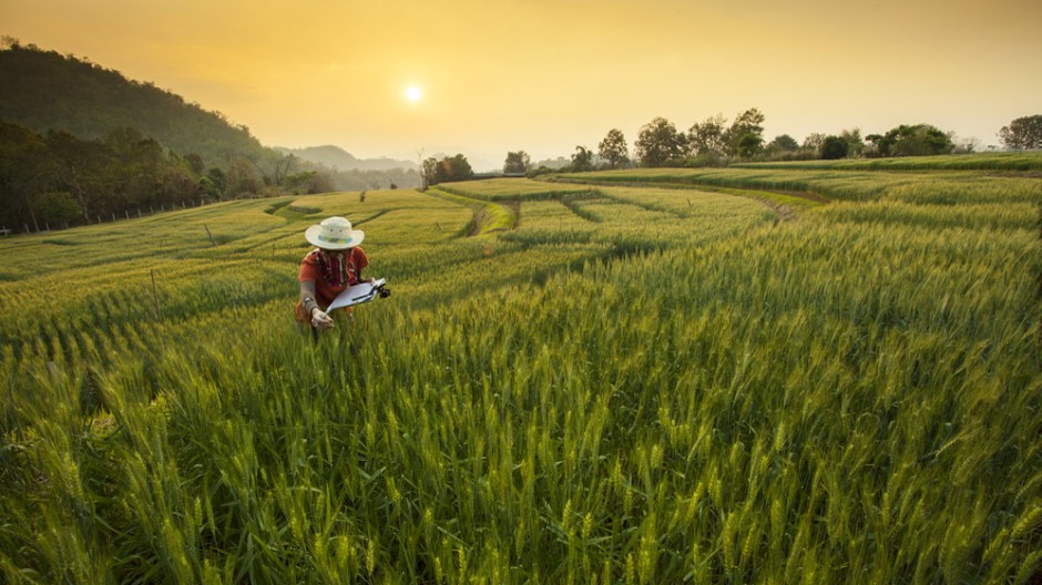 Image of a researcher in field. Researchers propose a new analytical framework for studying the global food system, encompassing four research areas: agricultural ecology, equity in global and local food systems, the cultural dimensions of food and agriculture, and human health: Frontiers in Sustainable Food Systems.