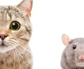 Image of a cat and a rat. Study shows any benefit of using cats to control city rats is outweighed by the threat they pose to birds and other urban wildlife: Frontiers in Ecology and Evolution