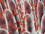 人肠与肠细菌,三维图
