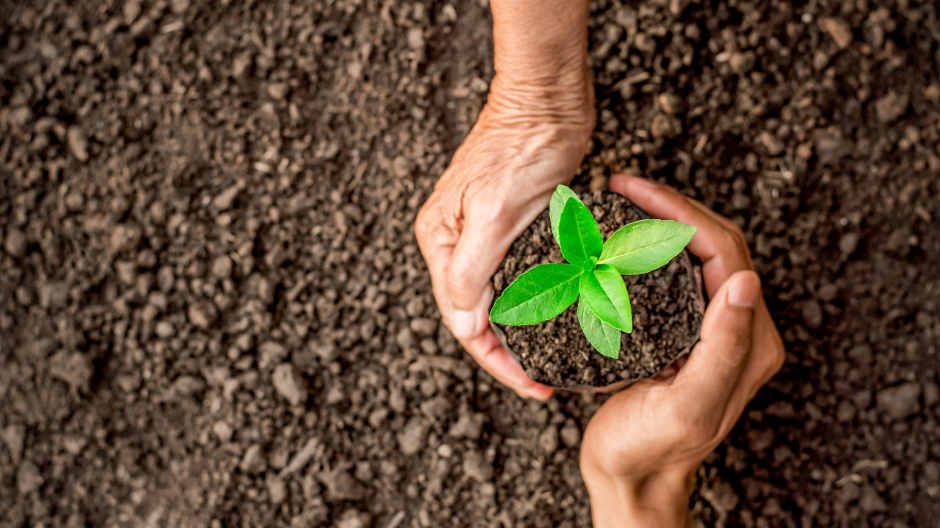 Hands holding a small plant above soil