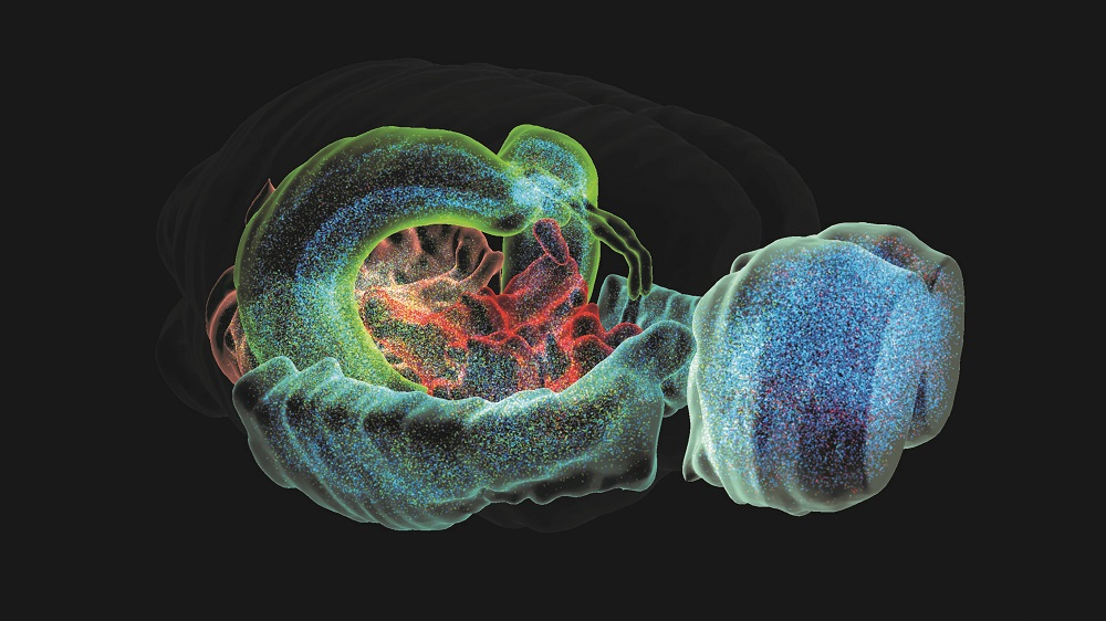 Blue Brain Project releases first-ever digital 3D brain cell atlas
