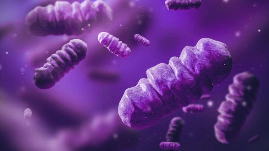 Frontiers in Energy Research: The first reported use of photosynthetic microbes in a battery-like 'bioelectrochemical system' shows that purple bacteria could turn wastewater treatment plants into zero-carbon fuel generators