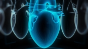 Digital human heart made of virtual wireframe. 3d illustration