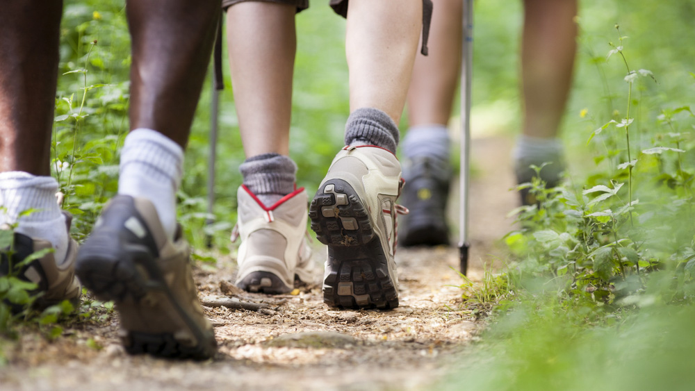 Image of people walking on a forest trail. Research finds that frequently used forest trails have fewer birds - even when the trails have been used for decades - showing a negative environmental impact of trails: Frontiers in Ecology and Evolution