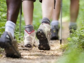 人走在森林步道形象。经常使用的森林小径的研究发现,有较少的鸟类 - 即使路径已经使用了几十年 - 展示创新的负面环境影响:前沿生态与进化万博亚洲体育manbetx 手机客户端
