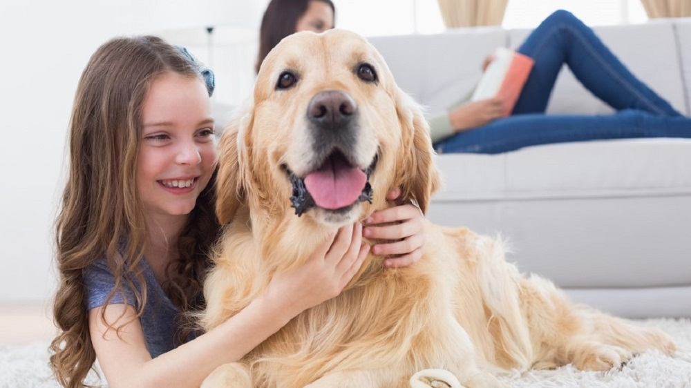 Frontiers in Veterinary Science: A new study shows that both children and parents frequently misinterpret canine behavior, but a short training session can bring substantial and lasting improvements.