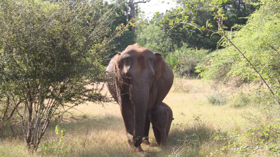 Frontiers in Ecology and Evolution: Researchers at the Smithsonian Institute have proposed a 'demographic safe space' for Asian elephants, to improve conservation of these and other large, slow-breeding animals