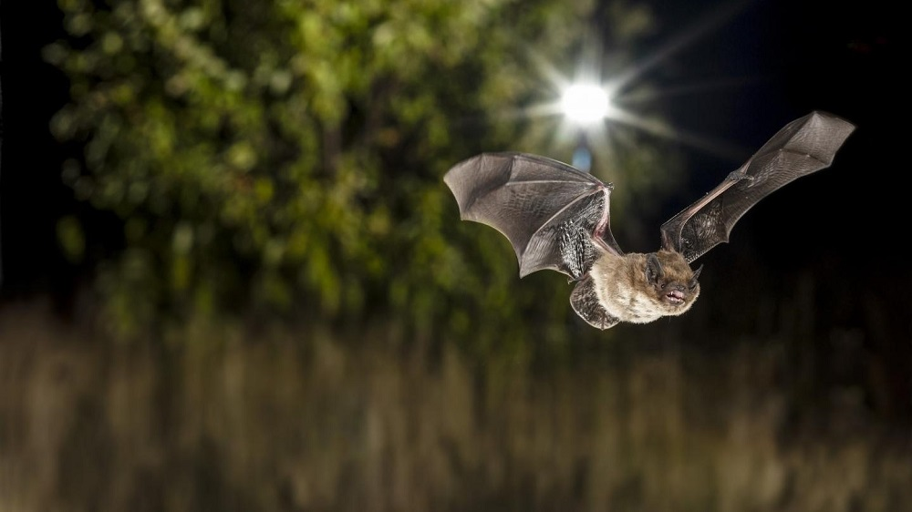 Frontiers in Ecology and Evolution: A German study sheds new light on how exactly ultraviolet (UV) emitting and non-UV emitting street lamps influence the activity of bats in the Berlin metropolitan area, and whether tree cover might mitigate the effects of light pollution