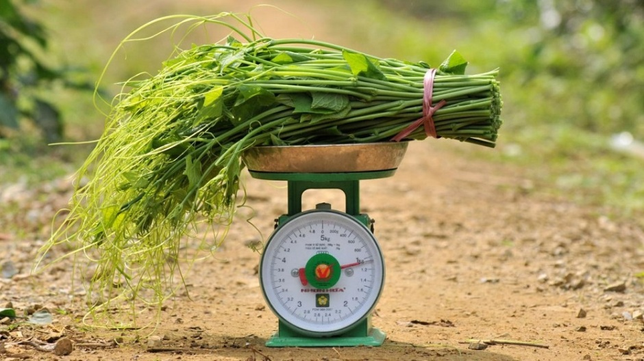 Frontiers in Sustainable Food Systems; Through cost-saving practices for coffee, rice, corn and livestock production, Vietnam can take steps to meet Paris Agreement commitments, says a study that highlights climate action potential for agriculture, forestry and land use in SE Asia