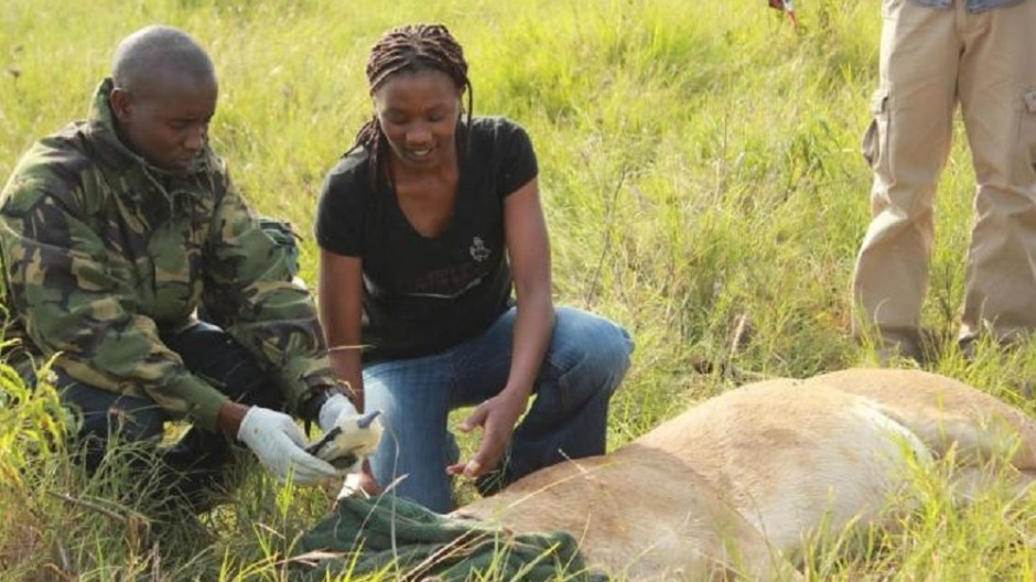 Frontiers in Ecology and Evolution: Endangered African antelope and the lions that prey on them may benefit from certain cattle ranching practices in Kenya