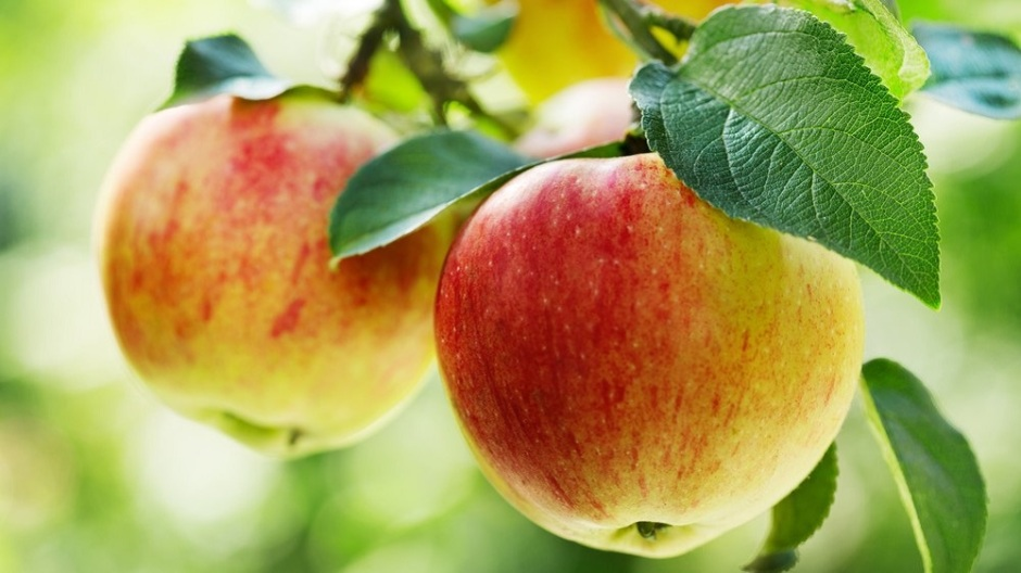 Frontiers in Microbiology: Most microbes are inside the apple – but the strains depend on which bits you eat, and whether you go organic