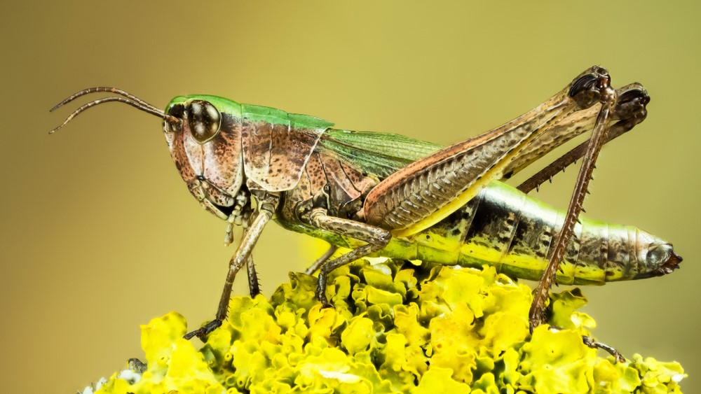Frontiers in Nutrition; Grasshoppers and silkworms have antioxidant capacity similar to fresh orange juice, says study