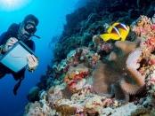 海洋科学家的图像观察珊瑚形成水下