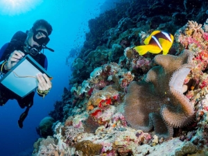 Image of marine scientist observing a coral formation underwater