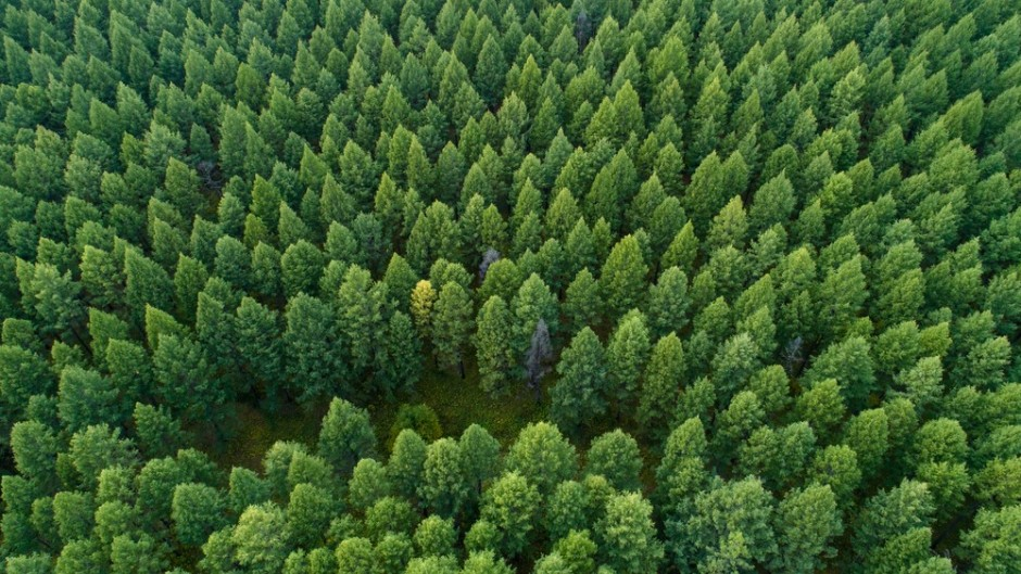 """Frontiers in Forests and Global Change;  """"Proforestation"""" has significant potential in the United States"""