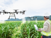 Technician farmer use wifi computer control agriculture drone on sweet corn field
