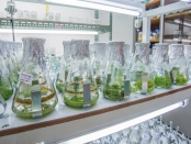 Shaker or rotator plant growth experiments done in the laboratory of plant tissue